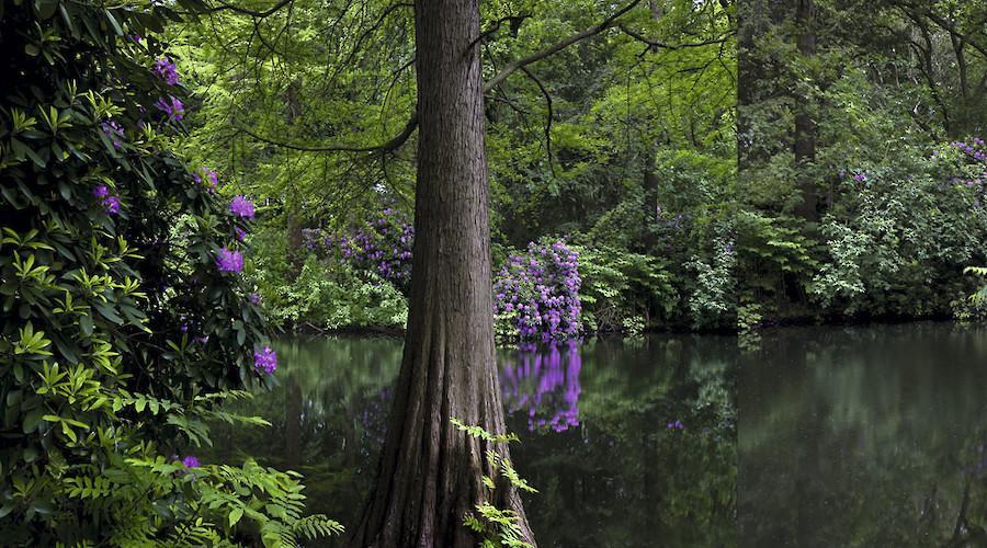 Tiergarten. A German Romantic Garden